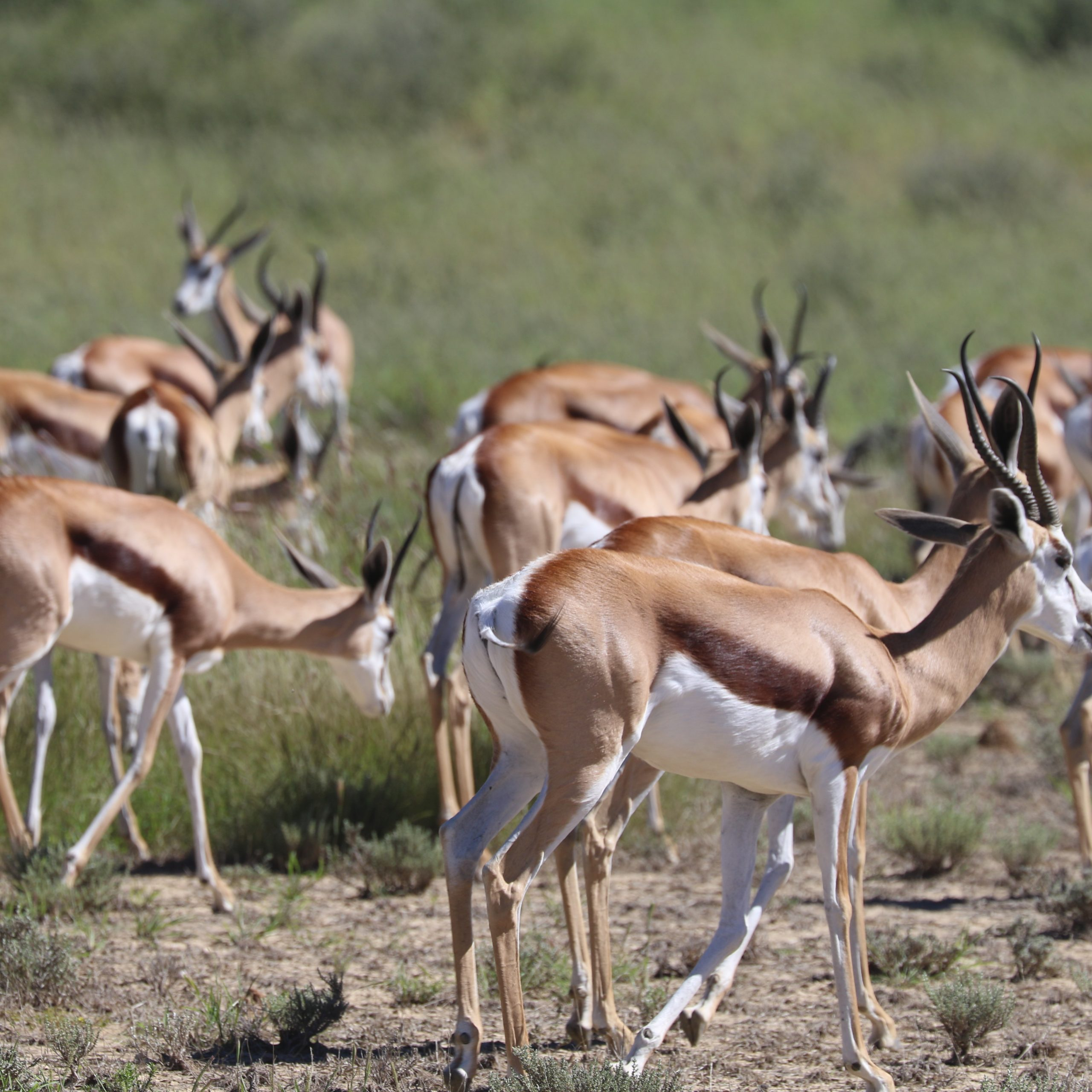 Day 7 | The Kgalagadi Transfrontier Park